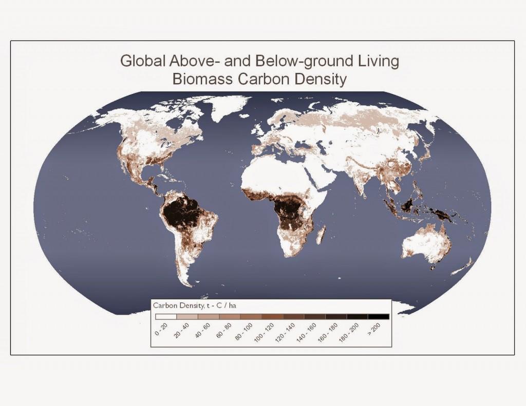 Living biomass carbon density
