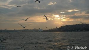 seaguls-over-Bosphorus-Turkey-768x432