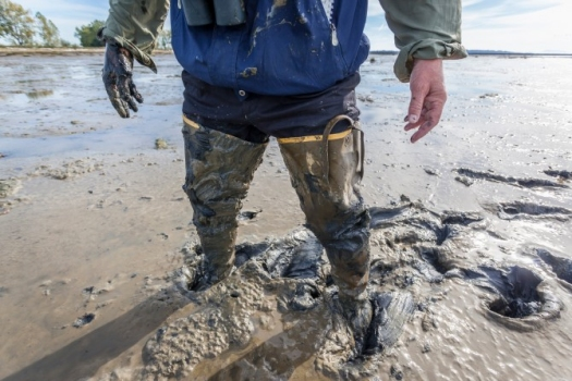 Slick and slippery to walk on, the mud at Roberts Bank lacks the visceral appeal that many other environmental battlefields have, such as old-growth forests. But debate is growing over the future of this vital area. Photo by Ron Watts